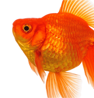 לדגים