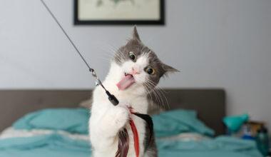 כיצד לקרוא את שפת הגוף של החתול שלכם? מה הוא מנסה לומר ולבטא?